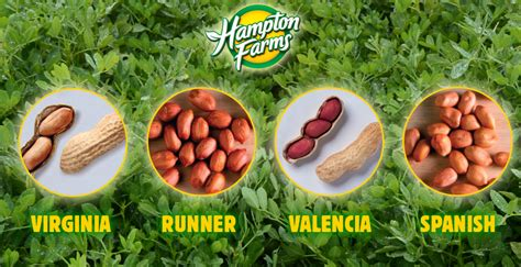 peanut types hton farms