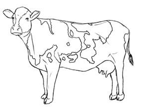 cow colors free coloring pages of cow spots