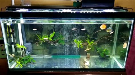 membuat aquascape bening membuat filter aquarium tanpa kuras 1000 aquarium ideas