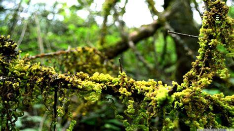 greenery  rain lush hd pictures wonderwordz