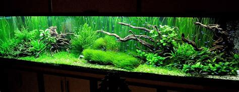 Co2 Package Aquascape 7 321x70x75 cm lighting 3x70w mh 276w t5he co2 adding
