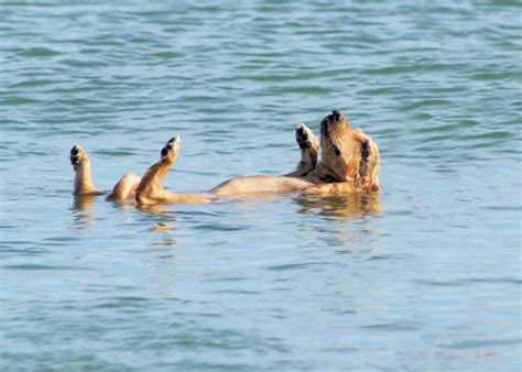 dogs swimming these swimming dogs are about to get you ready for summertime iheartdogs