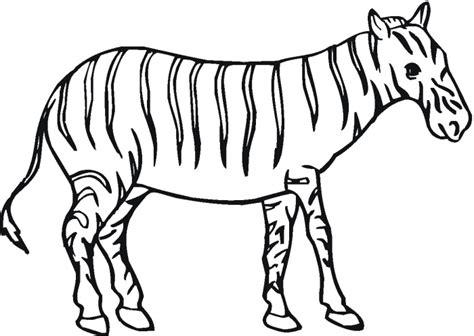 zebra outline coloring page zebra outline clipart best
