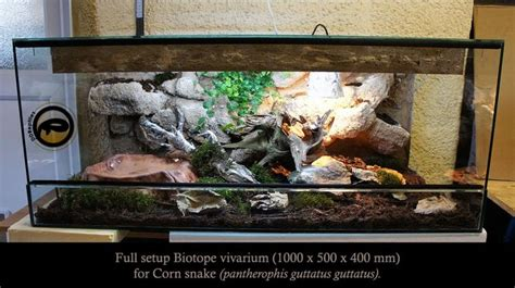 corn snake biotope vivarium reptile forums