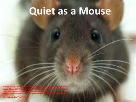 snug as a bug in a rug idiom teaching grammar comparative expressions using animals