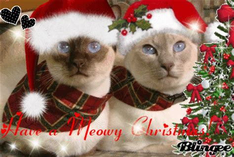 siamese christmas picture  blingeecom