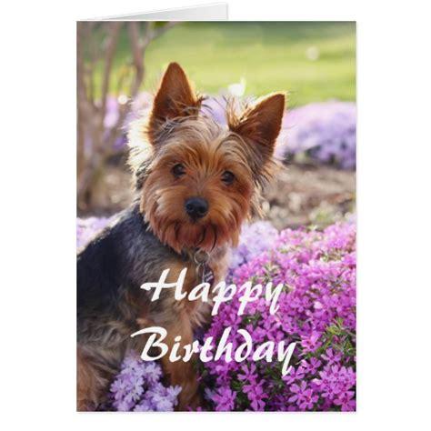 happy birthday yorkie images yorkie happy birthday greeting card zazzle