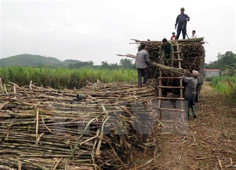 Lukita 3 In 1 Set Dharya indonesia targets to produce 1 2 million tonnes of sugar in 2017