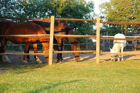 agriturismo con in agriturismo con cavalli escursioni a cavallo in toscana