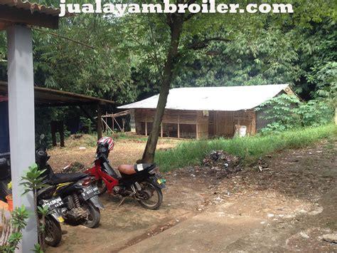 Jual Bibit Ayam Broiler Di Bogor jual ayam broiler di ciputat tangerang selatan jual ayam