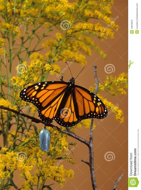 wings emerging from troubled times with new and deeper wisdom books monarch butterfly royalty free stock photo image 14870875