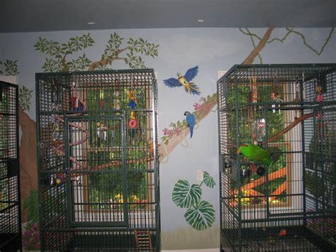bird room my bird room for my birds gardening that i