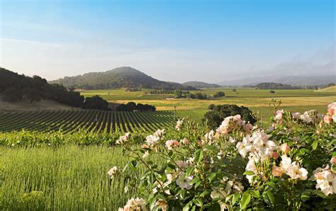 spring  napa valley weather  event guide