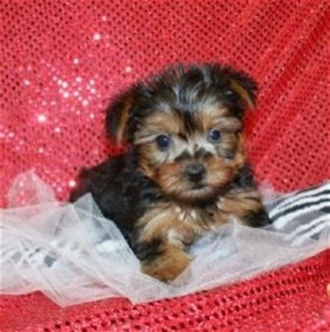 free puppies in alabama dogs hueytown al free classified ads