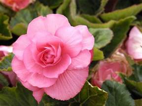 Flower Plants by Pretty Indoor Flowering Plants Today Com