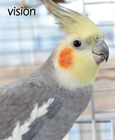 amazon com birds pet supplies cages accessories toys