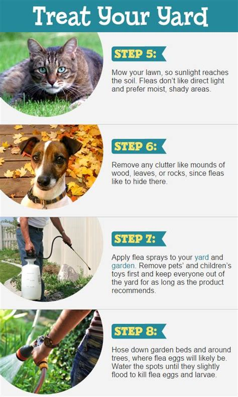 how to get rid of fleas in a house how to get rid of fleas how to instructions