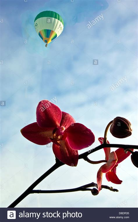 Dr Kevin Thistle Flower Coklat air bud stock photos air bud stock images alamy