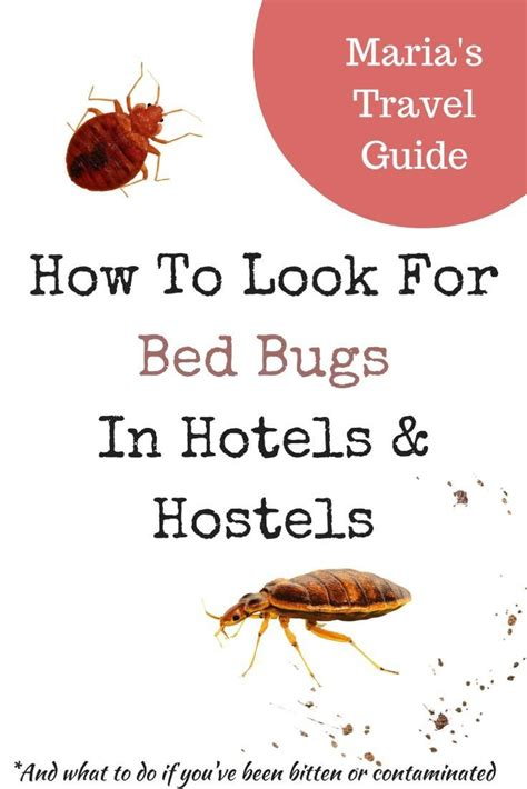 how bed bugs travel 1000 images about travel tips on pinterest around
