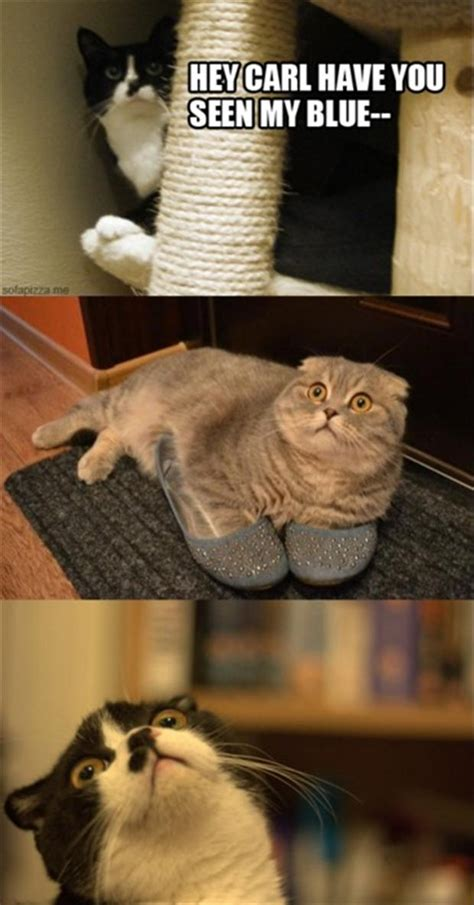 funny cat in shoes funny cat wearing shoes dump a day