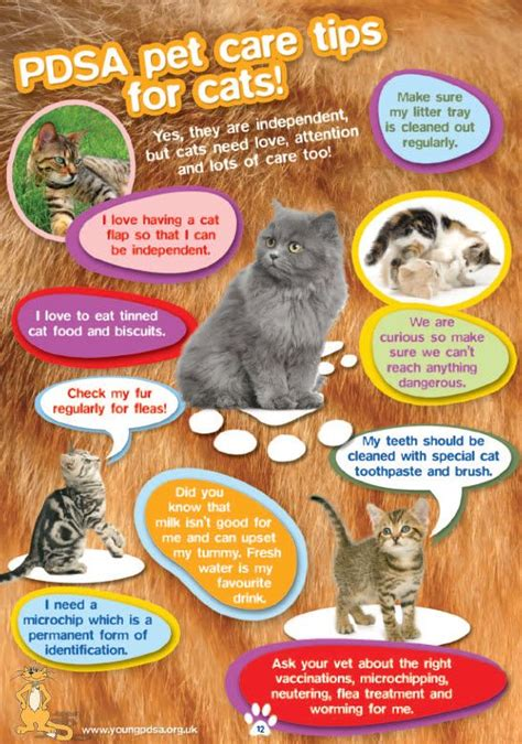 8 Tips On Caring For Pet Rabbits by 61 Best Scout Brownies Pets Images On