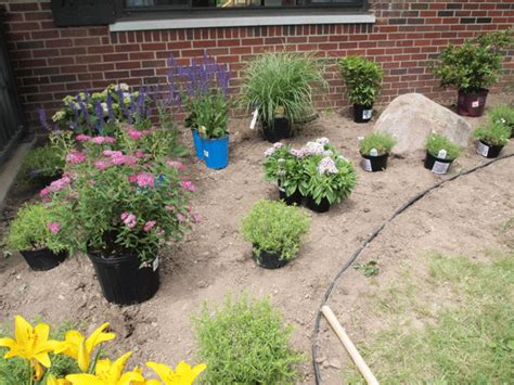 names of landscaping plants