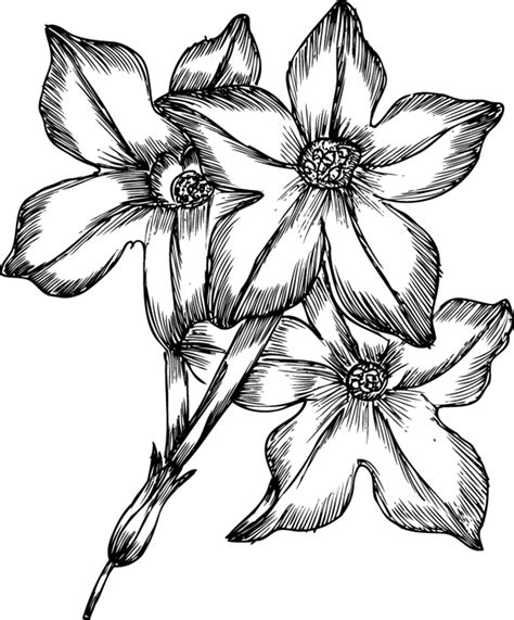 spring pictures to draw drawings of spring flowers cliparts co