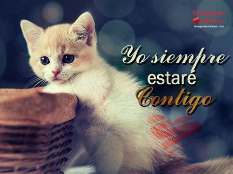 imagenes de amor de gatitos tristes 8 im 225 genes de gatitos tiernos con lindas frases de amor
