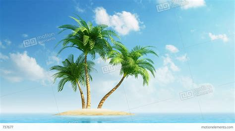 with palm tree island growing palm trees on island at sea stock animation 737677