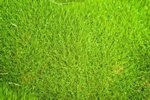 1000+ ideas about zoysia sod on pinterest | zoysia grass