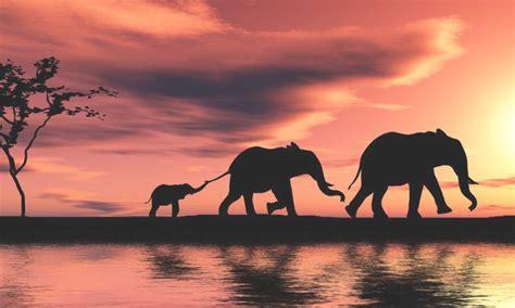 sudafrica imagenes sud 225 frica conoce sus mejores atracciones y lugares tur 237 sticos