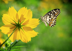 imagenes flores mariposas imagenes de mariposas flores y colores auto design tech