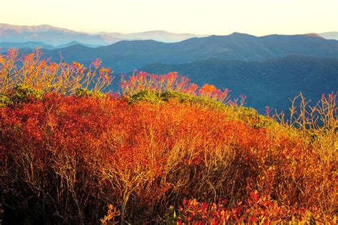 asheville fall colors fall color report asheville and nc mountains asheville