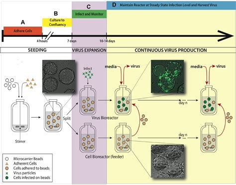 bioreactor cell culture protocol a bioreactor method to generate high titer genetically