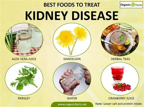 kidney disease diet fresh articles the best guides of 2017
