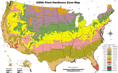 Garden Planting Zones - garden planting hardiness zones by us state removeandreplace com
