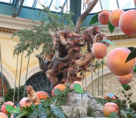 new year monkey display bellagio gardens welcomes year of the monkey living las