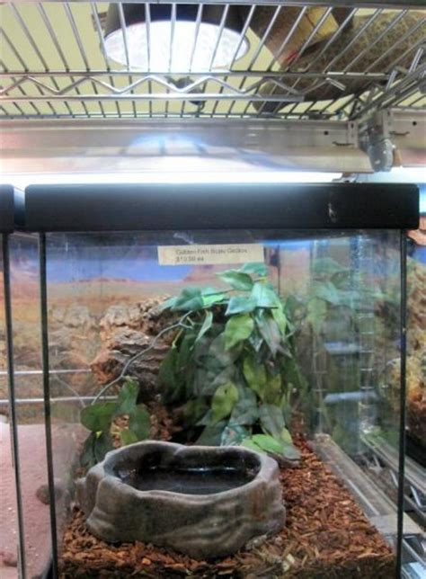Review Of Reptile Heat Bulbs