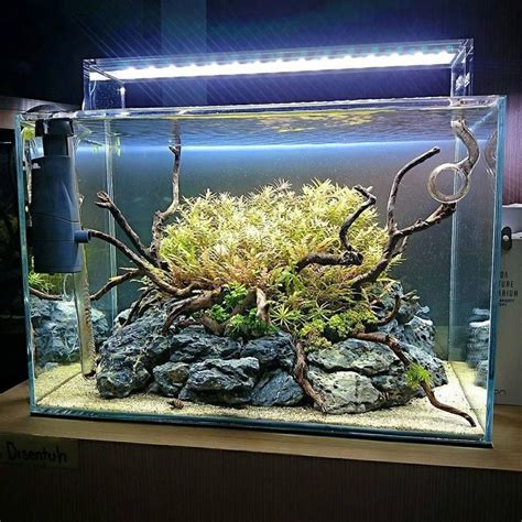 freshwater aquascaping ideas 569 best images about aquarium on pinterest african