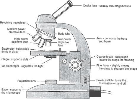 the compound microscope diagram the compound light microscope hourlybook