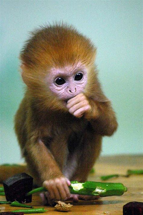 Funny Pictures Gallery: Cute baby monkeys, cute baby