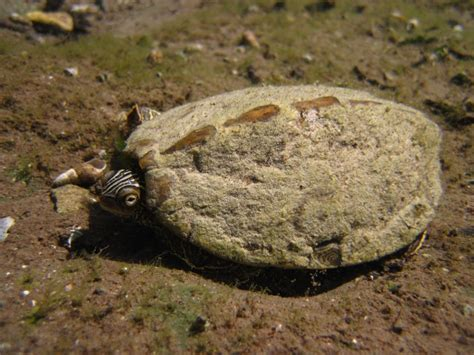 texas map turtle new page 1 www uta edu