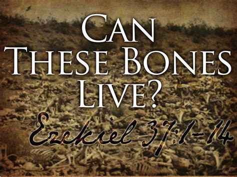 these are the bones that i want for my bathroom i love quot can these bones live quot on vimeo