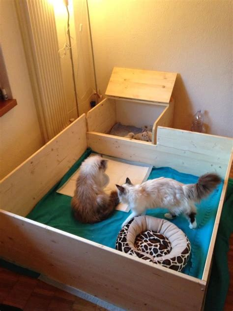 whelping box bedding a whelping box for cats great idea to build one like this
