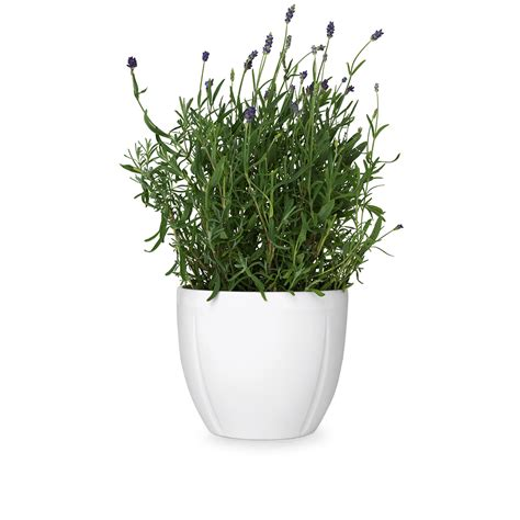 Home Interior Plants by Grand Cru Flowerpot