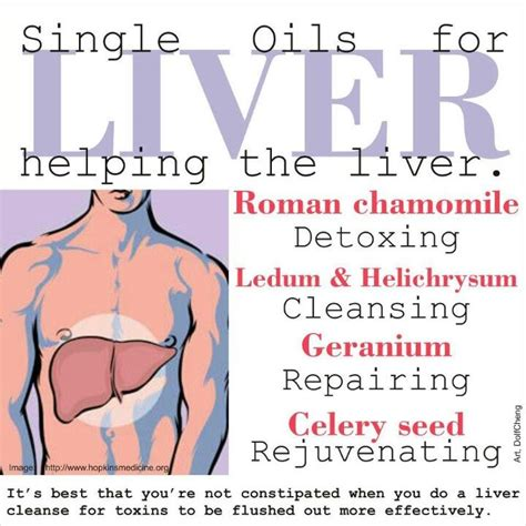 Essential Oils For Liver Detox by 145 Best Images About Pbc How To Live With This Liver