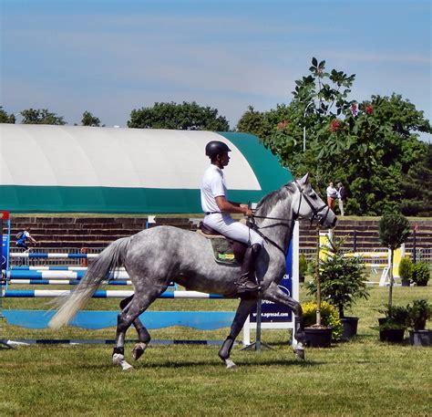 gratis paarden gratis afbeeldingen dier jumping hengst paarden