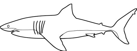 shark coloring pages coloring pages shark coloring pages free and printable