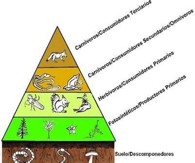 cadenas troficas componedores materia y energ 237 a en los ecosistemas niveles tr 243 ficos