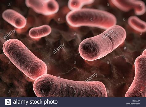 Y Pestis yersinia pestis rod shaped bacteria in the bubonic form